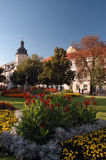 staden blommar parken Royaltyfria Bilder