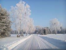 staden nära den järnväg vägen skiner snowsunen för att övervintra trä Royaltyfri Bild
