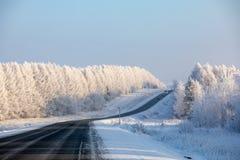 staden nära den järnväg vägen skiner snowsunen för att övervintra trä Den svarta huvudvägen går till och med en vit snö-täckt fro arkivbild