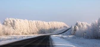 staden nära den järnväg vägen skiner snowsunen för att övervintra trä Den svarta huvudvägen går till och med en vit snö-täckt fro arkivfoto