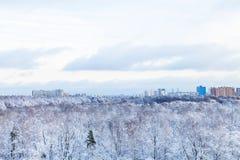Staden och fryst parkerar i vinter Arkivfoto