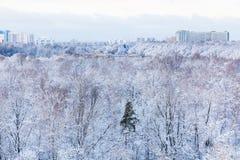 Staden och fryst parkerar i vinter Royaltyfri Bild