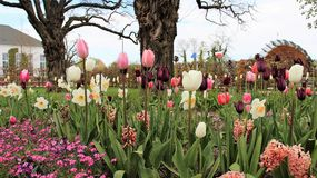 Staden parkerar den söta tulpanblomningen royaltyfri bild