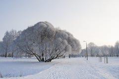 Staden parkerar i vinter Arkivfoton