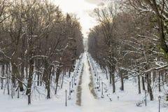 Staden parkerar Maksimir Zagreb, vinter Royaltyfri Foto