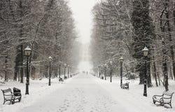 Staden parkerar Maksimir Zagreb, vinter Arkivfoto