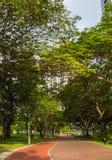 Staden parkerar med stora träd Arkivfoton