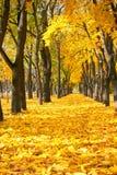 Staden parkerar på höstsäsongen, träd i rad med stupad guling le Arkivbild
