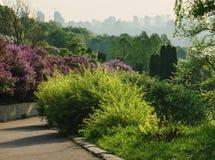 Staden parkerar trädgården arkivbild