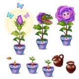 Stadia van de groei magische bloem met menselijk gezicht royalty-vrije illustratie