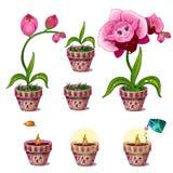 Stadia van de groei van magische roze bloem met gezicht royalty-vrije illustratie