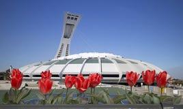 Stadio olimpico di Montreal Fotografia Stock Libera da Diritti
