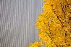 Stadionabstrakt begrepp och träd Royaltyfria Foton