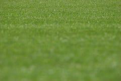 Stadiongräs arkivbild