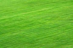 Stadium field Stock Image