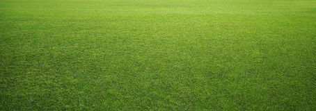 Free Stadium Grass Royalty Free Stock Images - 78677109