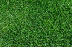 Stadium grass Stock Images