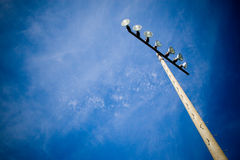 Stadium Lights. Standing against brilliant blue sky with wispy clouds Stock Images