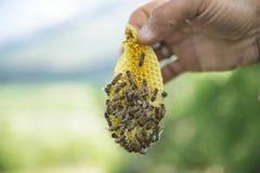 Stadiumproductie van natuurlijke honing De toekomst van de imkerijsector royalty-vrije stock foto
