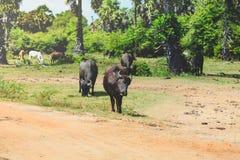 Stado bizon w przyrodzie zdjęcie stock