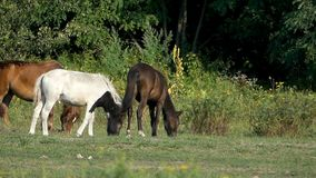 Stado duzi i mali konie na zielonym gazonie zbiory