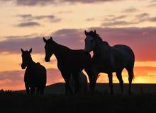 stado konie Zdjęcia Royalty Free
