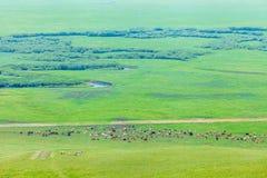 Stado konie na obszarze trawiastym Zdjęcie Royalty Free