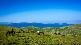 Stado konie wysocy W górach fotografia stock