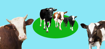 Stado krowy Zdjęcia Stock