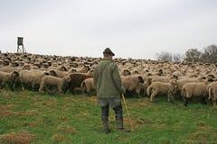 stado owiec Zdjęcia Royalty Free