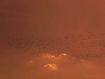 Stado ptaki Fotografia Stock