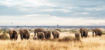 Stado słoń w Kenja Afryka Obrazy Royalty Free