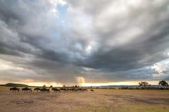 Stado wildebeest na równinach pod burzy chmurą z promieniem światła przybycie przez chmur fotografia stock