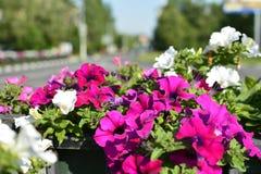 Stads- bakgrund med blommor och vägen Royaltyfri Foto