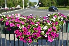 Stads- bakgrund med blommor och vägen Fotografering för Bildbyråer