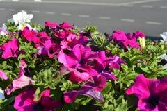 Stads- bakgrund med blommor och vägen Royaltyfria Bilder
