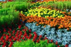 Stads- blomsterrabatt arkivbild