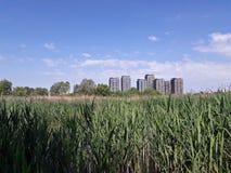 Stads- delta i Bucharest - Vacaresti sjön Fotografering för Bildbyråer