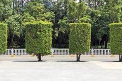 Stads- design av det formade cylindriska trädet arkivbilder