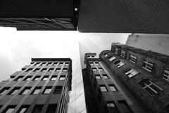 stads- djungel arkivbilder