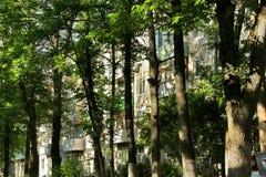 Stads- djungel: fönster av det bostads- huset som blockeras av stammar av högväxta träd Royaltyfri Bild