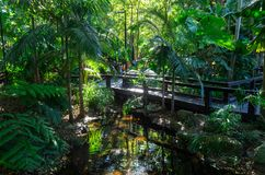 Stads- djungel på den södra banken i Brisbane, Australien royaltyfri foto