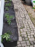 Stads- grönsak och Herb Container Gardening arkivfoton