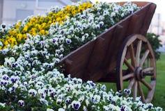 Stads groen ontwerp - witte en gele liefde-in-luiheid bloemen Stock Afbeelding