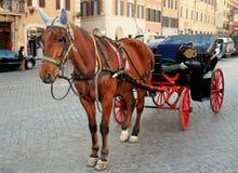 stads- hästström Royaltyfri Foto