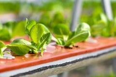 Stads- jordbruk, stads- lantbruk eller stads- arbeta i trädgården Arkivbilder