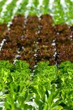 Stads- jordbruk, stads- lantbruk eller stads- arbeta i trädgården Arkivfoton