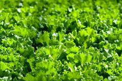 Stads- jordbruk, stads- lantbruk eller stads- arbeta i trädgården Fotografering för Bildbyråer