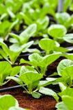 Stads- jordbruk, stads- lantbruk eller stads- arbeta i trädgården Royaltyfri Fotografi