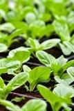 Stads- jordbruk, stads- lantbruk eller stads- arbeta i trädgården Royaltyfria Foton